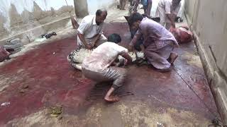 Farhan Bhai ka danger bull || Karachi Cow Mandi 2018 Latest  || #mandi2018 #karachimandi