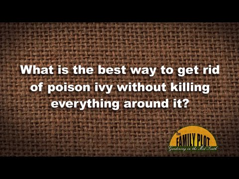 Q&A - How to kill poison ivy without killing other plants