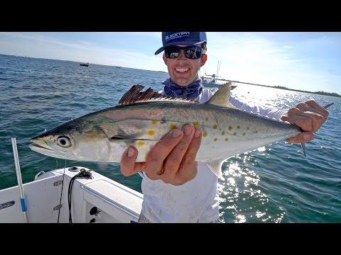 Epic Spanish Mackerel Fishing with some Shark Action!