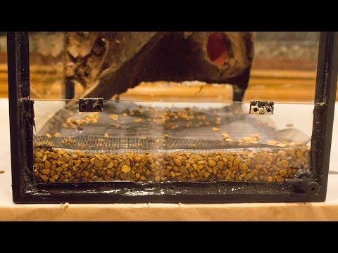 Make a Drainable False Bottom (Aquarium to Viv Conversion pt.3)