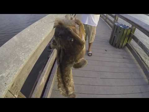Pier Fishing in Florida (catching bait fish with sabiki rig)
