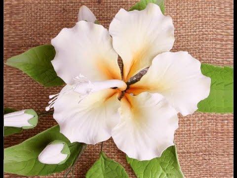 Hibiscus in pasta di zucchero,Tutorial perfetto