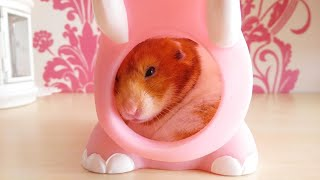 Hamster Morning routine + How to Care for your hamster during the day  | Malica Hamilton