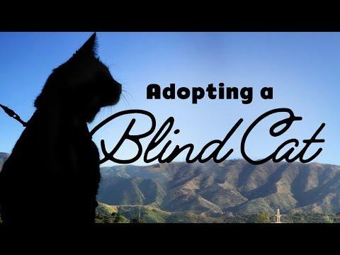 Adopting a Blind Cat