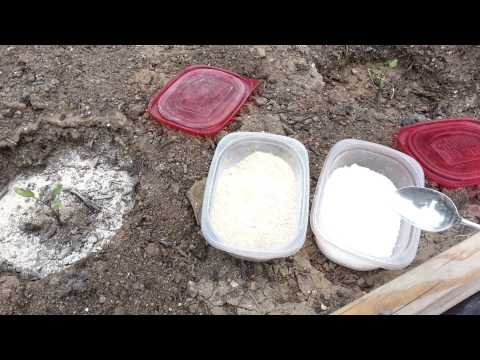 Adding Calcium and Magnesium to Tomato Plants