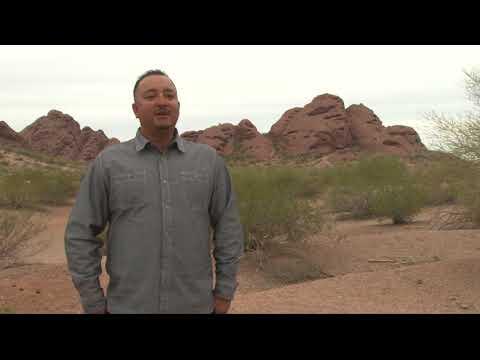 Conservationists work to save bighorn sheep in Arizona | Cronkite News
