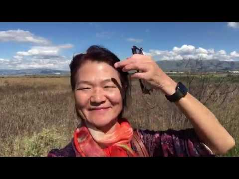 Tourist voiceover - Bay area discovery Alviso, California asmr