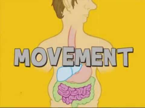 Your Digestive System - how food becomes poop - educational film - Movement