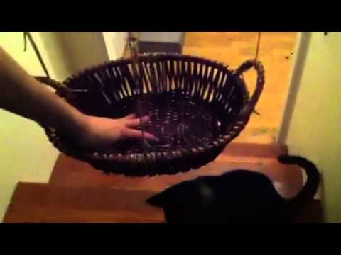 Creation of the Cat Hammock