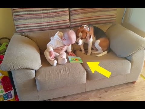 This Dog Was Left Alone With The Baby – But The Family Were Filming His Behavior