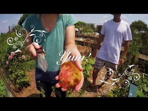 Erin's Organic Garden - July 2017