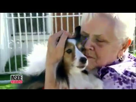 See Woman's Emotional Reunion With Dog That Was Mistakenly Adopted By Another Family