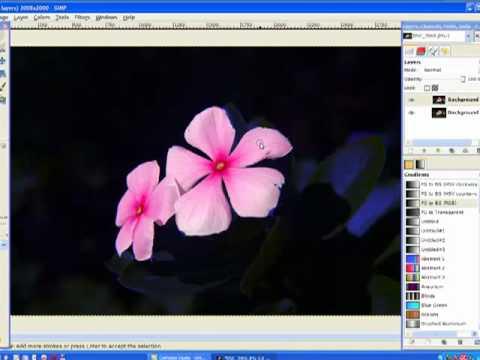 (Gimp) Rainbow Flower Color