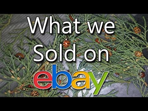 What we sold on ebay - Used Sunglasses, Ice Crusher, Vintage Bibles - Dorky Thrifters