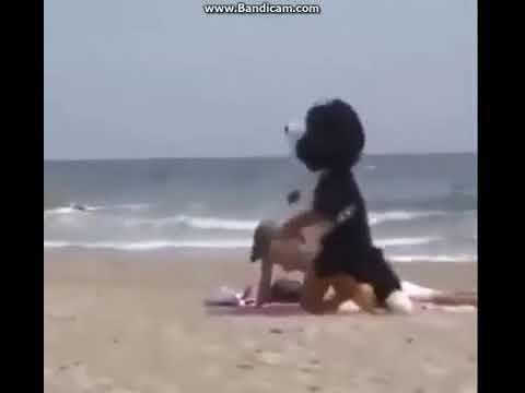 Xxx Mp4 Dog Fuck Women In Beach SEX Prank VDownloader Online Video Cutter Com 3gp Sex