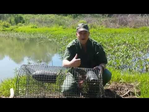 Turtle Trapping Part 2 - The Catch!