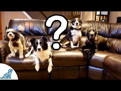 Should Dogs Be Allowed On The Couch?