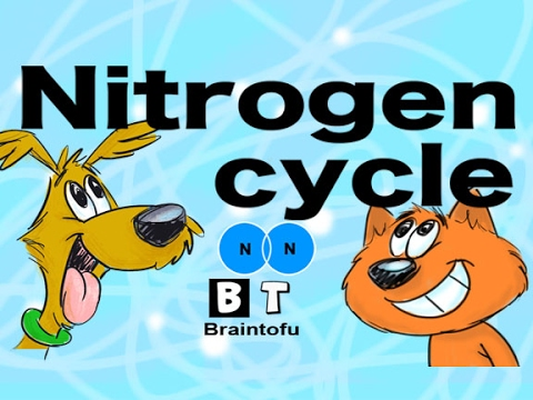 NITROGEN CYCLE MADE EASY - BIOLOGY FOR KIDS - FUN SCIENCE CARTOON