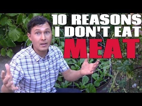 Top 10 Reasons Why I Don't Eat Meat