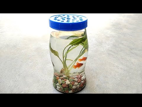 Bottle aquarium | Mini aquarium and aquarium fish