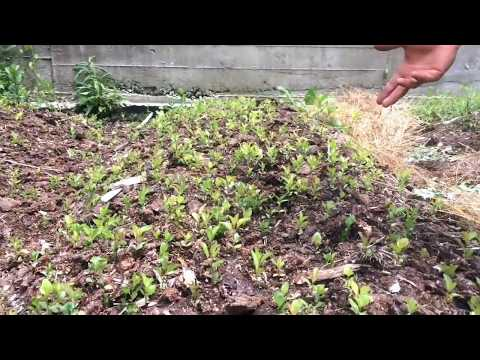 Abundant Propagation: Online Training with seeds and cuttings too!