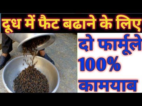 Dairy- दूध का फैट कैसे बढायें - How to increase fat in Cow Buffalo Milk - Fat badhane ka tarika