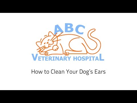 How to Clean a Dog's Ears