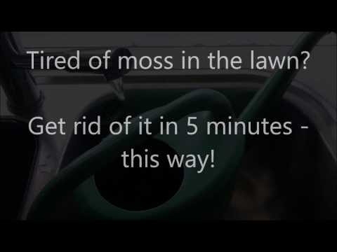 How to kill the moss instantly