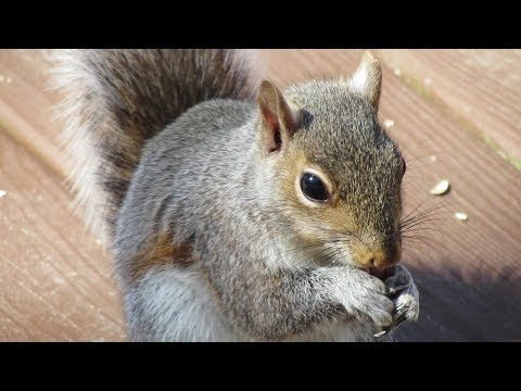 Up Close & Slow Motion Backyard Animal Action