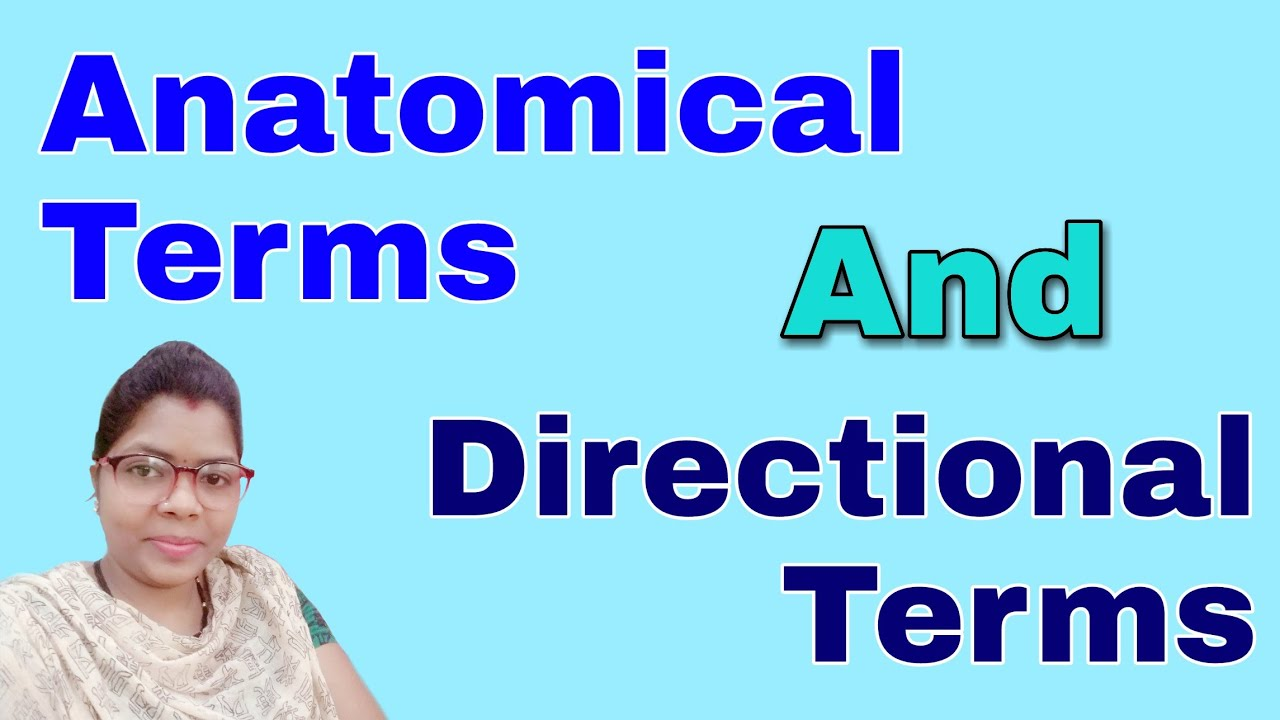 Anatomical Terms In Hindi   Anatomical Terms For Body Parts   Directional Terms Anatomy  