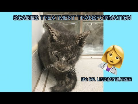 Cat saved from Scabies! | Transformation back to normal