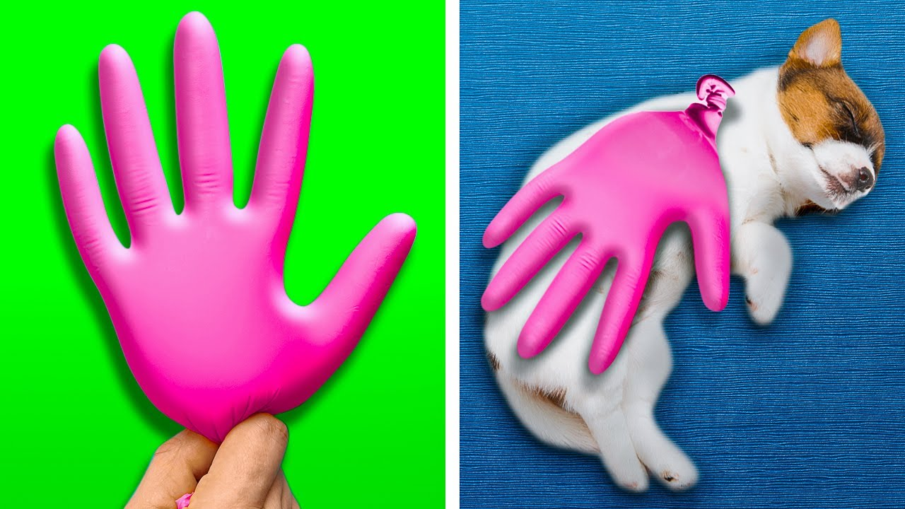 Cute Hacks For PET Owners! Cleaning Hacks, Gadgets For Pets, DIY Crafts By A PLUS SCHOOL