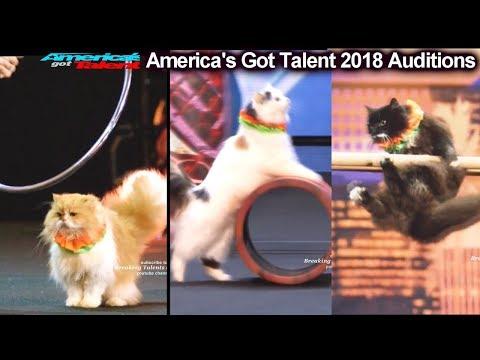AMAZING CATS ACT Marina Savitsky Cats America's Got Talent 2018 Auditions S13E01