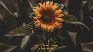 Download Sunflower - Sierra Burgess (Sierra Burgess Is A Loser) Lyrics Video