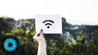 Das Internet des Waldes: Wood Wide Web - Clixoom Science & Fiction