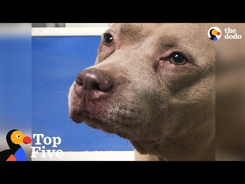 Shelter Dog Cries Until She Meets New Family + Other Happy Animal Rescues | The Dodo Top 5