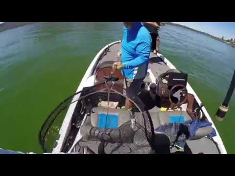 Bass Fishing Clear Lake - Summer Algae Bloom