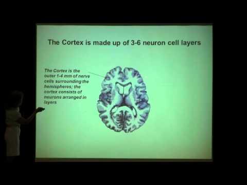 Cellular and Molecular Organization of the Brain