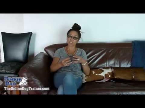 Dog training video testimonials