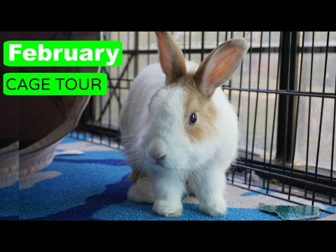 FEBRUARY CAGE TOUR!