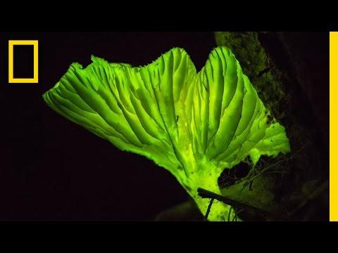 Glow-in-the-Dark Mushrooms: Nature's Night Lights | National Geographic