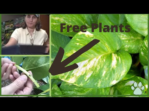 Part 1 How to Get Free Plants From Your Existing Houseplants
