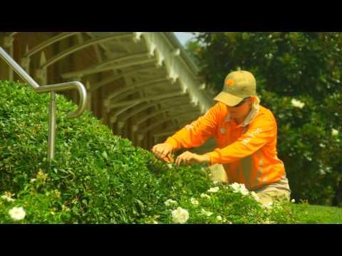 Landscape Maintenance Servies by Skyline Landscape Services