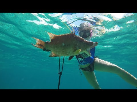 I ATE the Pistol!! Spearfishing and Free Diving for Conch! (West End, Bahamas)