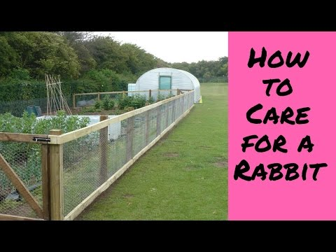 How to Care for a Rabbit