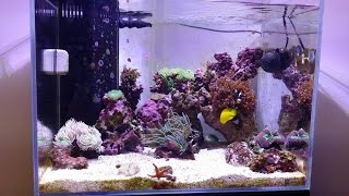 Reef Tank Update #7 Two New Anemones
