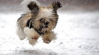 """""""Dogs Playing in Snow Compilation"""" 