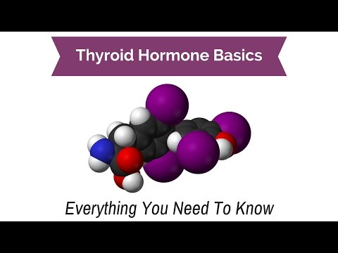 Thyroid Hormone Basics - Everything You Need to Know