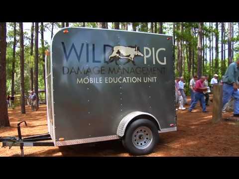 Building a Hog Trap