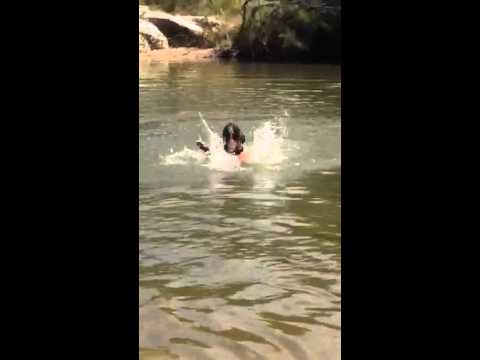 Funny boxer dog that can't swim